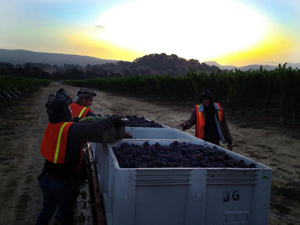 Napa Valley Harvest 2012 Cornerstone Cellars