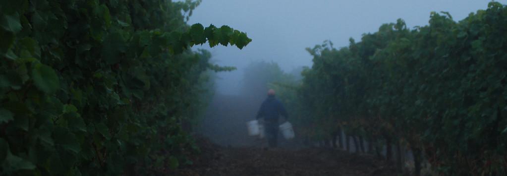 Oregon Harvest 2007, Anne Amie Vineyards