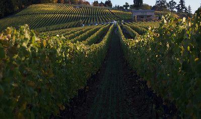 Harvests Willamette Valley 2009 to 2015 Cornerstone Oregon and Tendril Wine Cellars