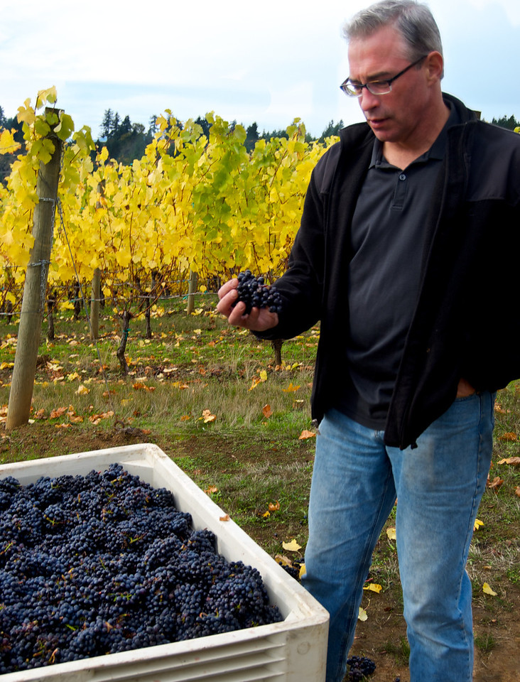 Harvest 2011 Cornerstone Oregon/Tendril