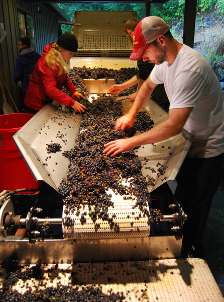 Harvest 2013 Willamette Valley Cornerstone Oregon/Tendril Wine Cellars