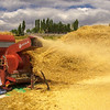 CB_Harvest03-19