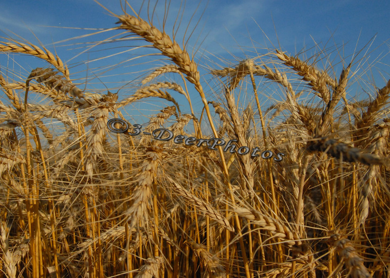 Harvest 07298