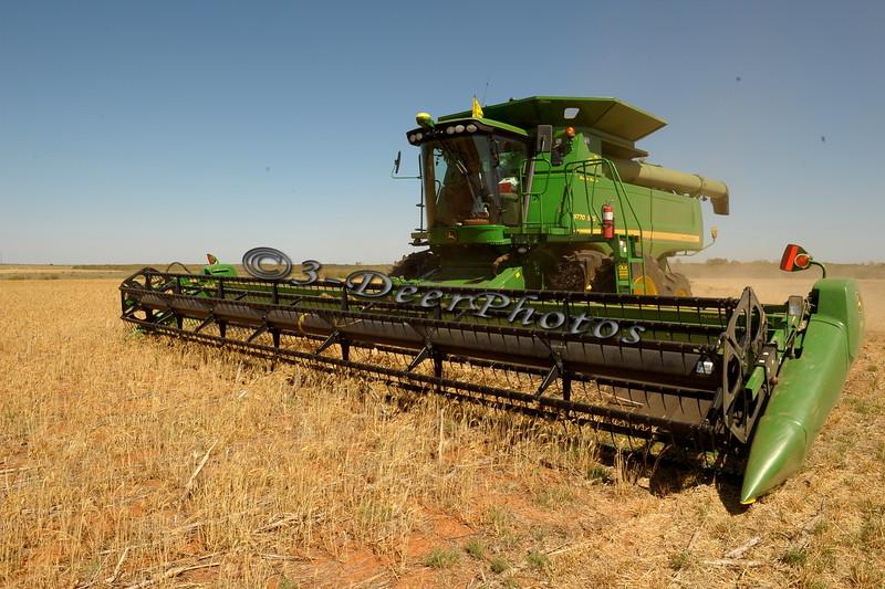 Harvesting at Iowa Park, TX