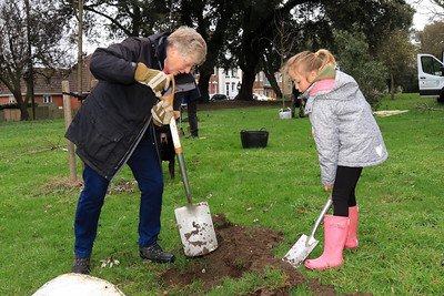02 MAR 2019 – Fruit Tree Planting, Cliff Park, Harwich. Tendring District Council and The Harwich Society Gardening Group. Photo Copyright © Maria Fowler 2019