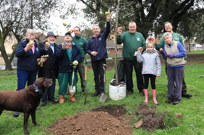 02 MAR 2019 – Pictured L-R: Aileen Farnell (HS), Barry Brown, Terry Rogers (HS), Alan Gardner (TDC), Colin Farnell (HS), Trevor Mills (TDC), Darcey Childs, Robin Coffin (TDC) and Cheryl Thompson (HS)  - Fruit Tree Planting, Cliff Park, Harwich. Tendring District Council and The Harwich Society Gardening Group. Photo Copyright © Maria Fowler 2019