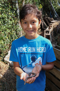 13 SEP 2020 – Pictured: Luca Vasquez-Nicholson with slow worm - Bobbit's Hole Nature Reserve – Heritage Open Days – Photo Copyright © Maria Fowler 2020