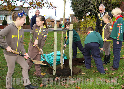 "Youngsters plant tree on behalf of Harwich Society.Members of the 1st/2nd Parkeston Cubs and the 1st Harwich Brownies took part in a tree planting ceremony in the Mayor's Gardens in Harwich on Saturday as the Harwich Society replaced a Black Poplar which was a feature of the gardens and which had to be removed last year due to age and disease. The replacement Black Poplar was paid for by the Harwich Society's secretary, Andy Rutter, and the metal tree guard was paid for by the Harwich Society.   Tendring District Council prepared the hole and placed the tree in it for the cubs and brownies to fill in watched by parents and group leaders along with the Mayor of Harwich, Cllr Dave McLeod, TDC's Portfolio Holder for Environmental Services, Cllr Nick Turner, and representatives of the Harwich Society. Harwich Society chairman, Colin Farnell, says   ""It was so important to have young people from our town involved in the planting as it is their generation who will see it reach maturity.  It will be lovely for them to be able to say they helped to plant it.""   The Harwich Society is extremely grateful to everyone who has played a part in ensuring that a black poplar is once again a feature of the Mayor's Gardens and those present were delighted by the true community atmosphere that accompanied the tree planting ceremony.   ""The tree planting was a great occasion with such a community atmosphere,"" continued Colin Farnell.  ""It was another good example of everyone working together to do something positive for our town."" For further information please contact: Colin Farnell on 01255 553610 or Garry Calver on 01255 551940 www.harwich-society.co.ukRegistered with the Civic Trust Registered Charity No. 261798Photography © Maria Fowler 2013"