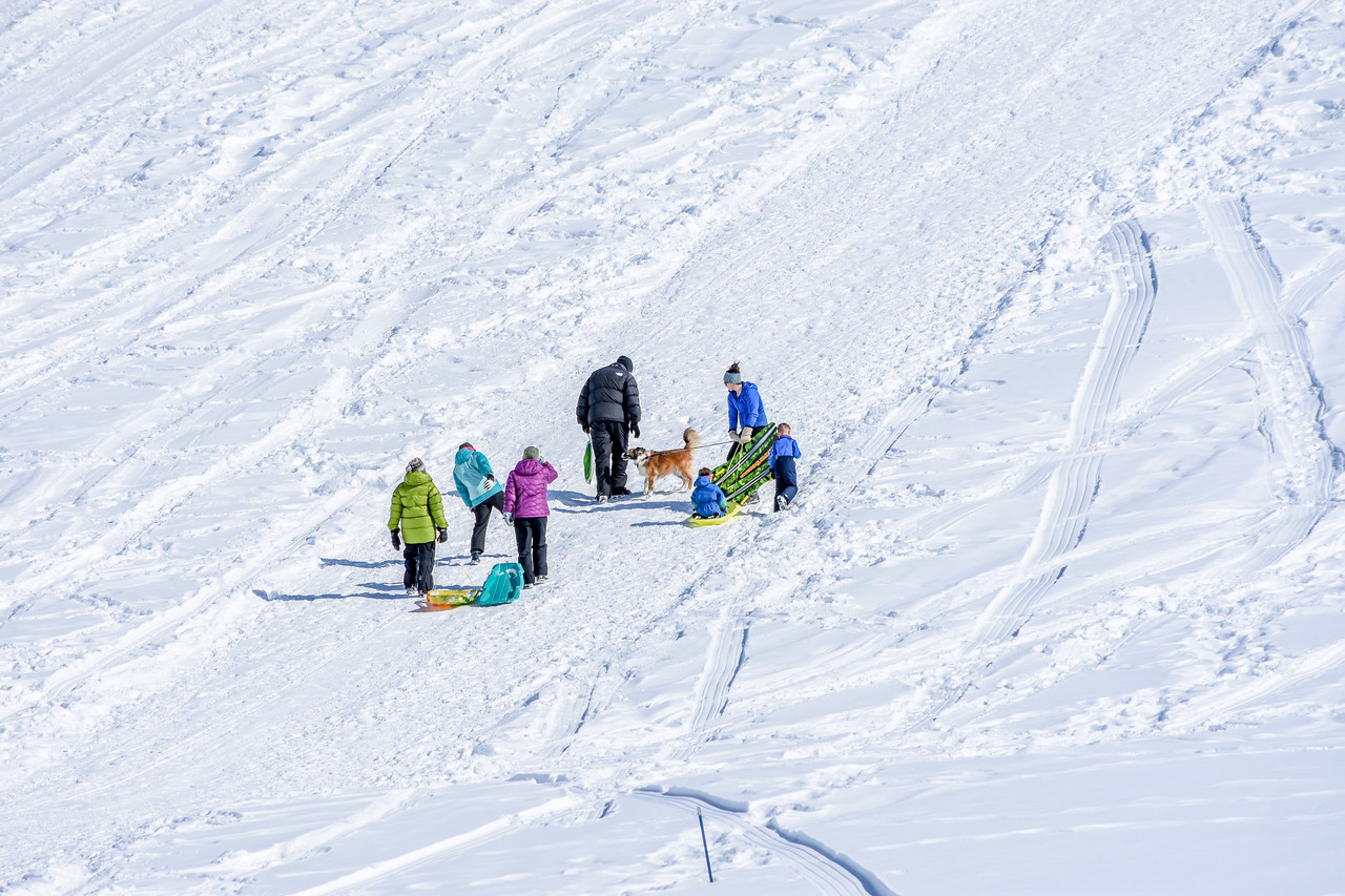 Two families walking up the hill so they can sled back down.  The dog had a great time encouraging the kids to sled.