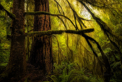 Soft Glow in the Forest