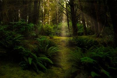 Coastal Forest Path