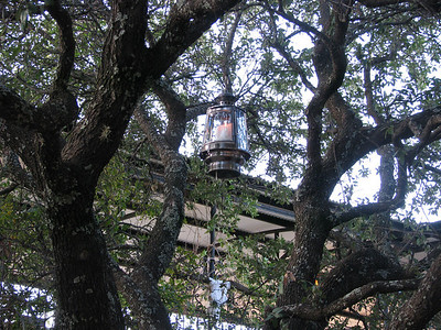 Lanterns in the tree