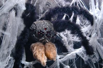 Spider Room - 3