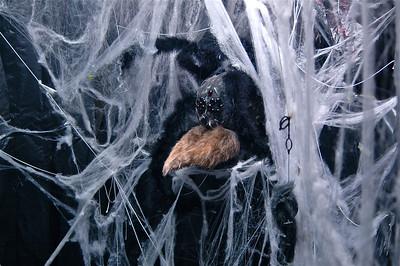 Spider Room - 4