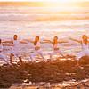 DSC03540 David Scarola Photography, Haute Yoga Palm Beach and Jupiter, web