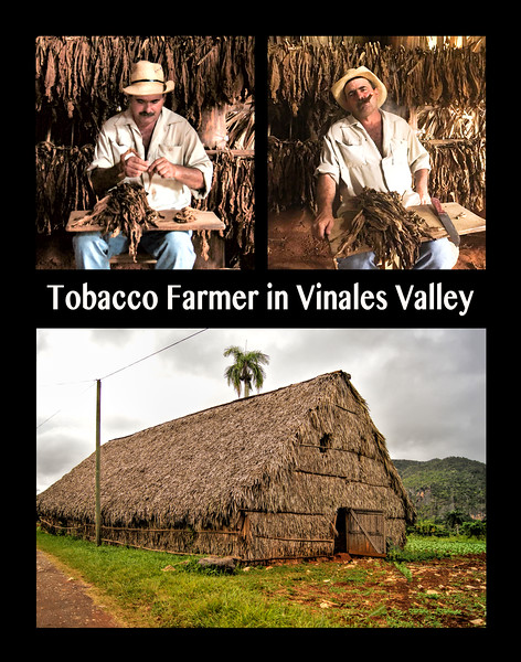 Tobacco Farmer in the Vinales Valley
