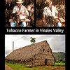 Tobacco Farmer in the Vinales Valley