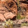 Desert vegetation in Havasu Canyon.
