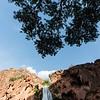 A tree frames the top of Havasu Falls.