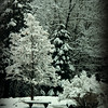 Winters Pew