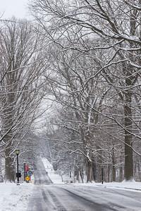 College Lane Allée