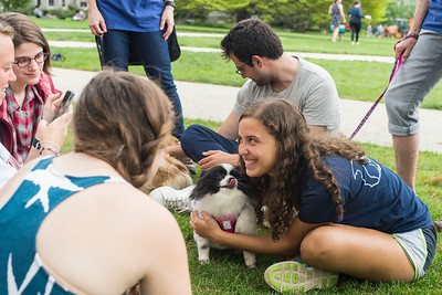 De-stress with Dogs
