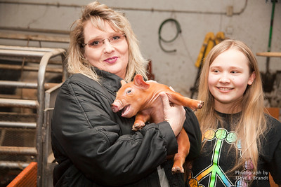 Raising Swines for 4H Teri Horinek has raised Grand Champions. Horink is putting up some of her new piglets for the 4H's to raise as show pigs at the HI-LINE SHOW PIG SALE March 18th Our Daughter Won Grand Champion Market Swine at Havre Fair 2016