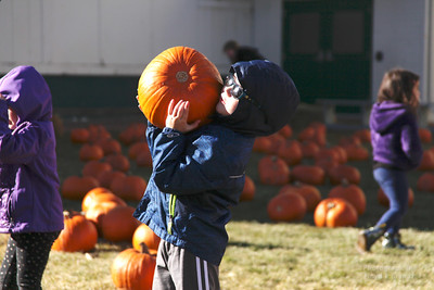 Havre Daily News/Floyd Brandt  Finding the perfect pumpkin for five year old Deagan Hellems at Saint Jude's School  Pumpkin Patch  Saturday Oct 21, 2017 Havre, Montana
