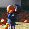 Havre Daily News/Floyd Brandt<br /> <br /> Finding the perfect pumpkin for five year old Deagan Hellems at Saint Jude's School  Pumpkin Patch  Saturday Oct 21, 2017 Havre, Montana