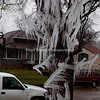 Havre Daily News/Floyd Brandt<br /> <br /> Havre residents thought winter had returned with large icicles hanging from the trees at 929 3rd Avenue Monday. What looked like a magical ice sculpture was just a mistake by resident Jake French. French said he forgot to turn the sprinklers off Sunday night and when he left for class in the morning he found what left Havre residents scratching their heads, wondering why there was only this much ice in French's yard. French said that social media lit up with discussion about his yard and people had been driving by, stopping to take pictures and that some were driving around the block to take a second look.