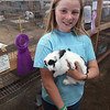 Havre Daily News / Floyd Brandt<br /> <br />  4H / FFA Rabbit Showing Blain County Fair Saturday, Aisslian Handy with her rabbit Oreo over all Grand Champion