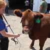 Havre Daily News / Floyd Brandt<br /> <br /> Alyssa Gruszie 4H / FFA Senior Beef Showing Blain County Fair Saturday, with Dude