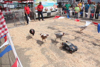 Havre Daily News / Floyd Brandt  Turkey Races on the Midway at the Blain County Fair Saturday. Video on Havre Daily News Facebook
