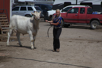 Havre Daily News / Floyd Brandt  Jaye Anderson 4H / FFA Senior Beef Showing Blain County Fair Saturday, with Buddy