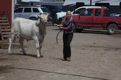 Havre Daily News / Floyd Brandt  Jaye Anderson 4H / FFA Senior Beef Showing Blain County Fair Saturday, with Buddy