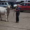 Havre Daily News / Floyd Brandt<br /> <br /> Jaye Anderson 4H / FFA Senior Beef Showing Blain County Fair Saturday, with Buddy