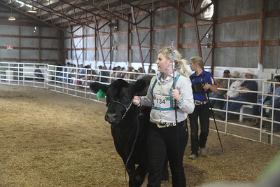 Havre Daily News / Floyd Brandt  Erika Arnold 4H / FFA Senior Beef Showing Blain County Fair Saturday, Sir 1392lbs