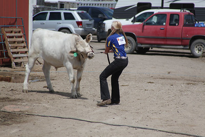 Havre Daily News / Floyd Brandt  Jaye Anderson 4H / FFA Senior Beef Showing Blain County Fair Saturday, with Buddy who just did not want co-operate.