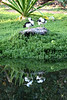 Ducks grooming