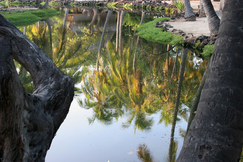 Reflections in the ponds at Kona Village