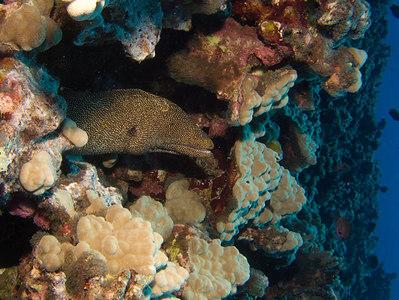 Kaiwa Point/Eel Cove/Pipe 5/17/06