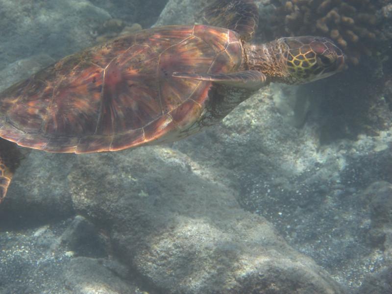 5/21/14 - Mauna Lani Beach