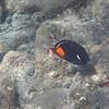 5/21/14 - Mauna Lani Beach - Achilles Tang