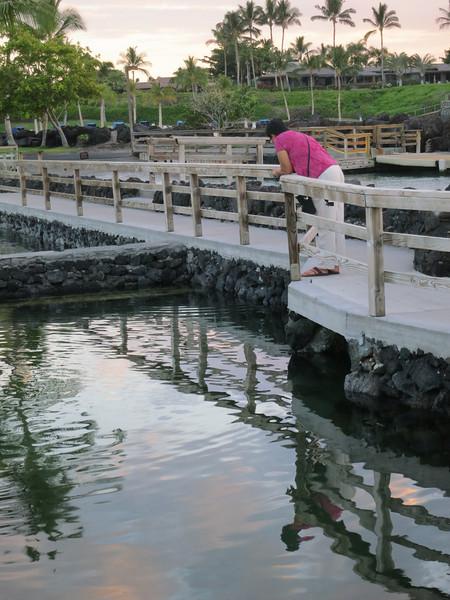 5/20/14 - The fishponds at Mauna Lani
