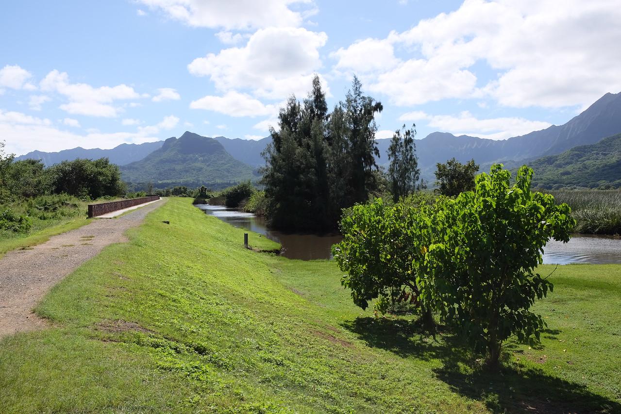 Kawainui Marsh park, Kailua, Oahu
