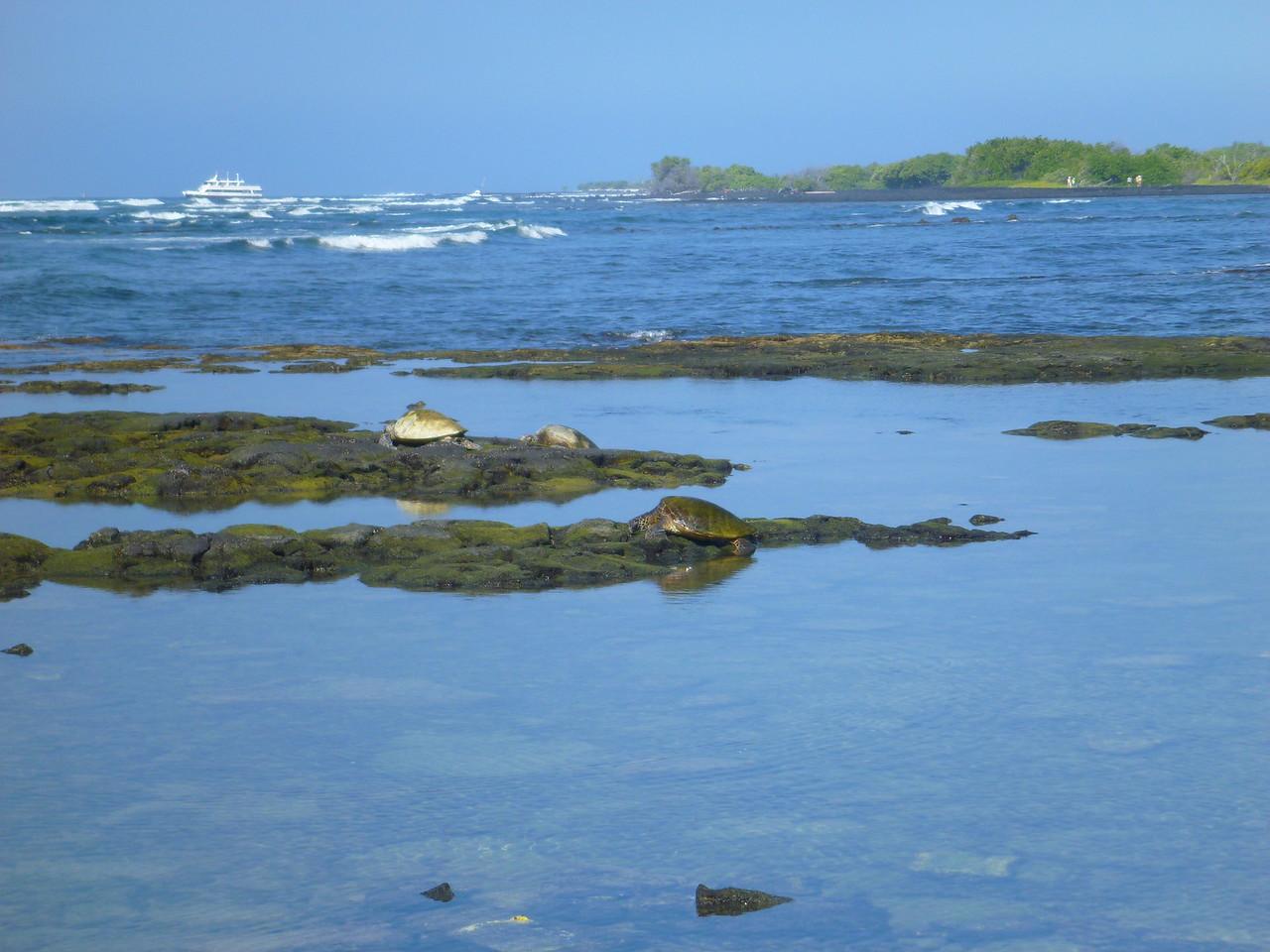 Sea turtles, Kaloko-Honokohau National Historical Park