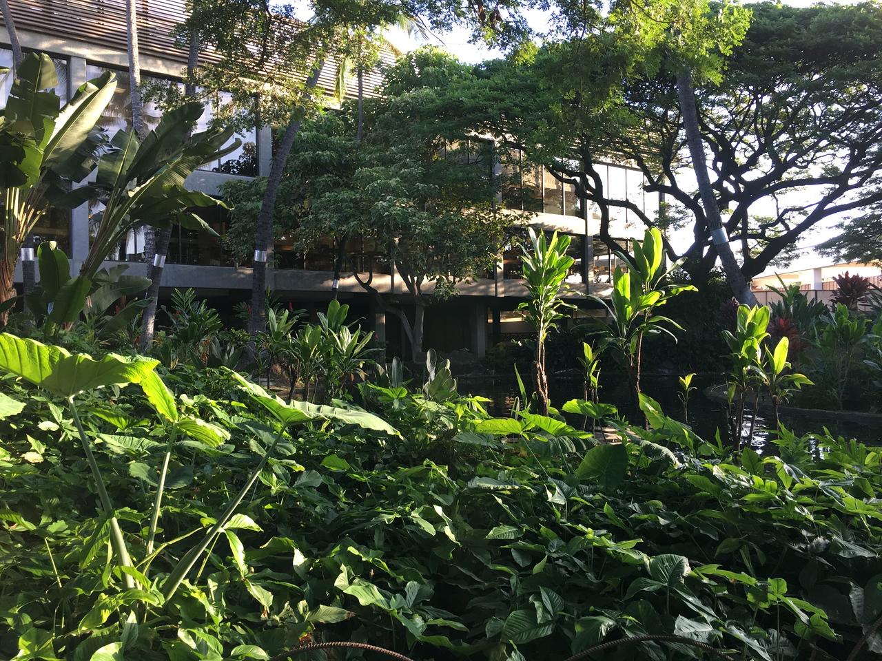 Hawaiian Culture Garden at the Honolulu airport