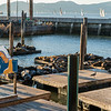 Pier 39 in San Francisco with the wonderful colony of seals