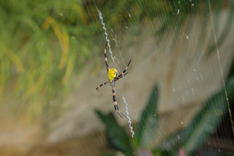 Even the Spiders are Beautiful in Hawaii