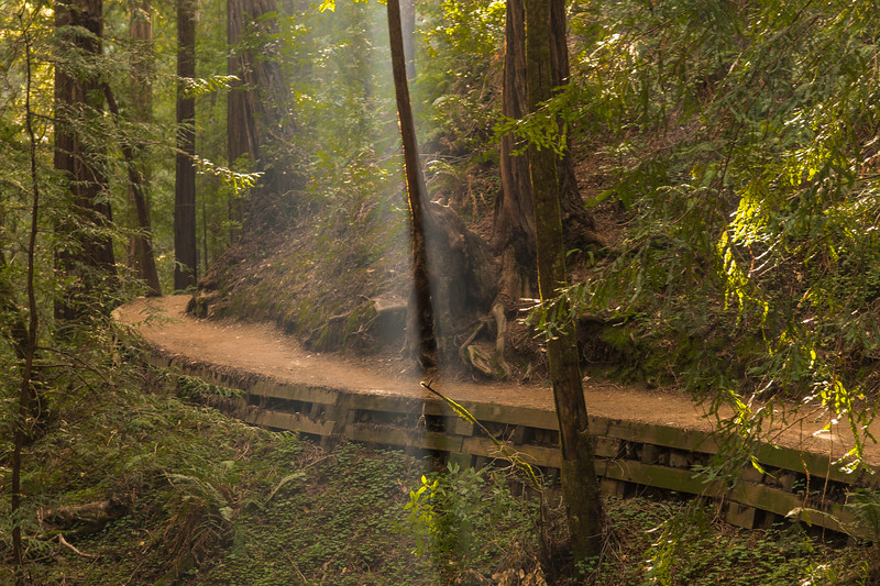 Muir Woods - just outside San Francisco yet a world away